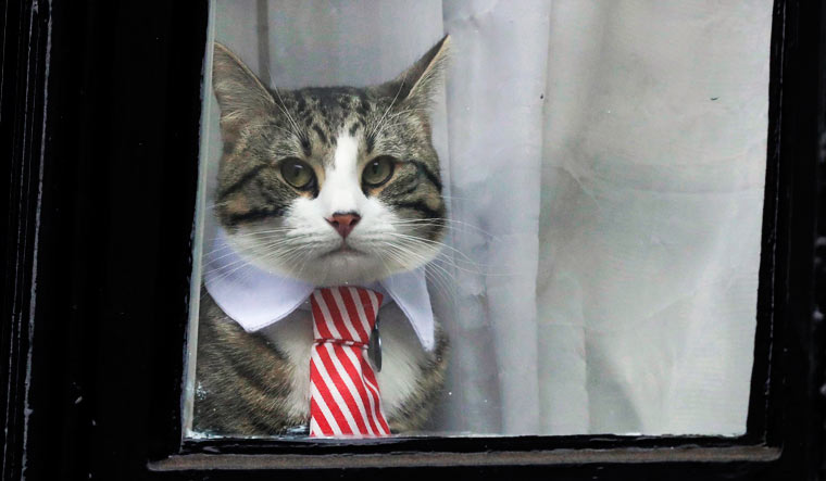Julian-Assange-Embassy-Cat
