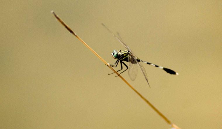 dragonfly-fest