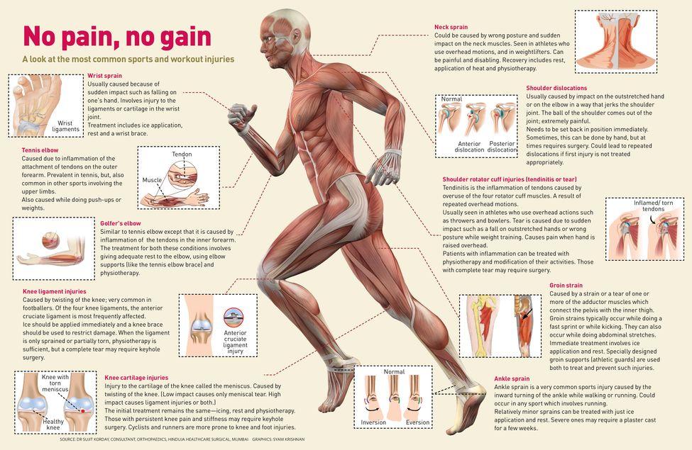 Ausgezeichnet Anatomy Of A Knee Injury Bilder - Menschliche Anatomie ...