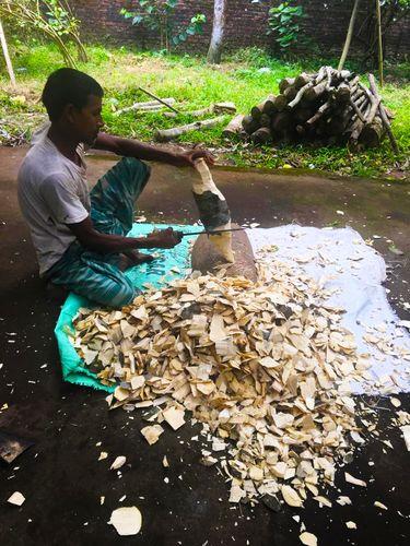 Healing process: A man shaves agarwood chips from the infected hardwood of the aquilaria agallocha bark | Krishnaraj Iyengar