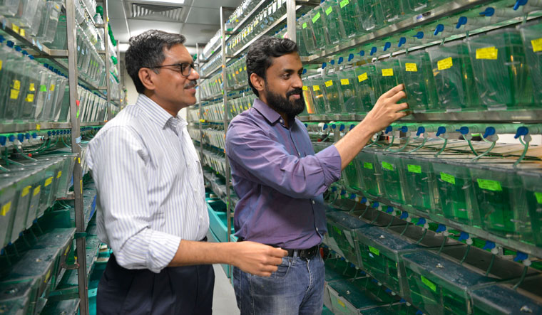 Understanding rare diseases: Scientist Sridhar Sivasubbu (left) and Dr Vinod Scaria at the zebrafish lab, Centre of Scientific & Industrial Research, New Delhi | Arvind Jain