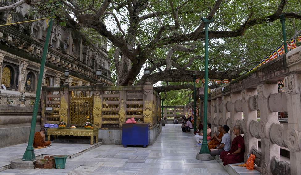 mahabodhi-tree3