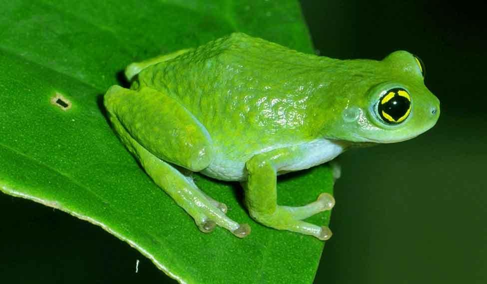 75bubblenestfrog
