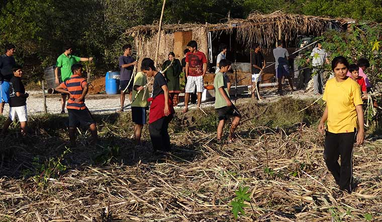 Sweet lessons: Students harvesting  sugarcane at Rishi Valley School.