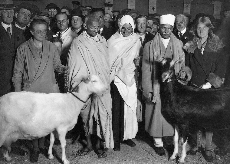 Animal charm: Gandhi visiting a dairy show in London | Dinodia