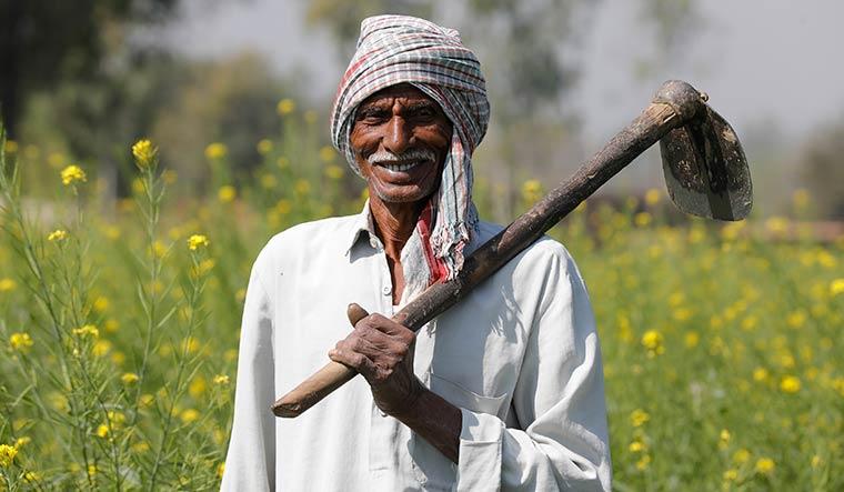 Harvesting hope: A farmer at Rampur Gomi Khera village near Lucknow   Pawan Kumar