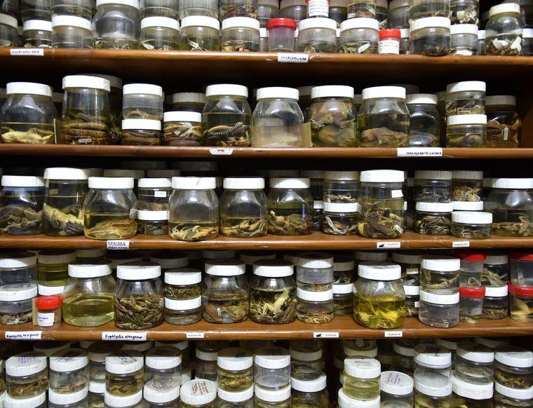 Unique collection: Specimens collected by satyabhama das biju | Aayush Goel