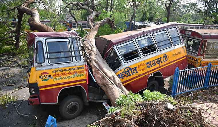 Hitting hard: Some 6,000 big trees were uprooted in Kolkata   Salil Bera