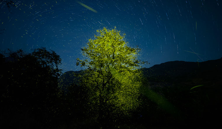 Tree, me and more: The award-winning photo of fireflies