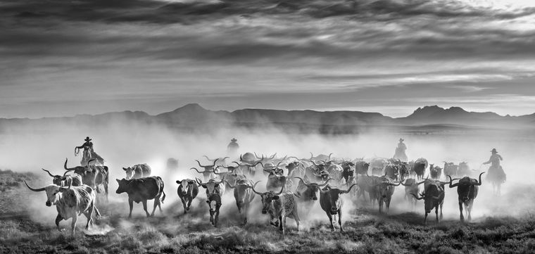 Frozen in time: Picture from Yarrow's Wild West series titled Thundering Herd