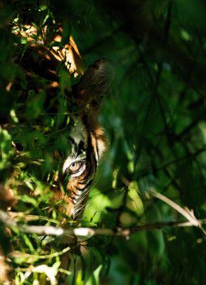 Crouching Tiger (2015)