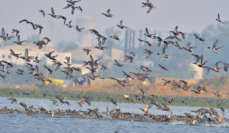 Change in spring arrival of migratory birds due to climate change - The Week