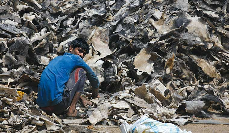 Mounting troubles: A worker sorts hides at a tannery in Kanpur. The closure of tanneries has led to immense loss of livelihood, especially to those working in smaller units | Pawan Kumar