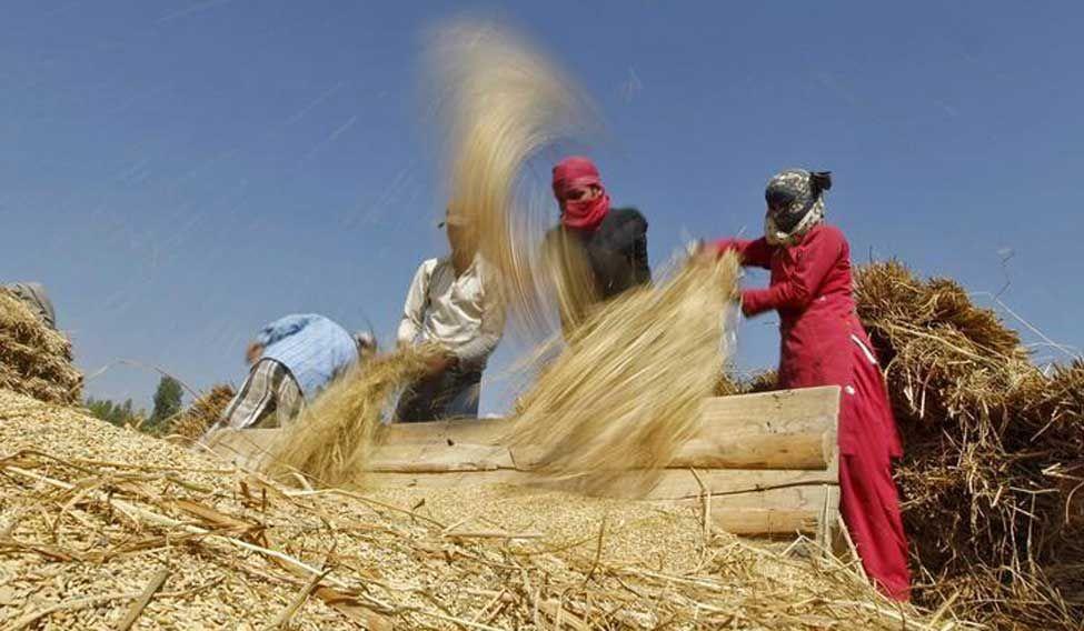 crop-insurence-reuters