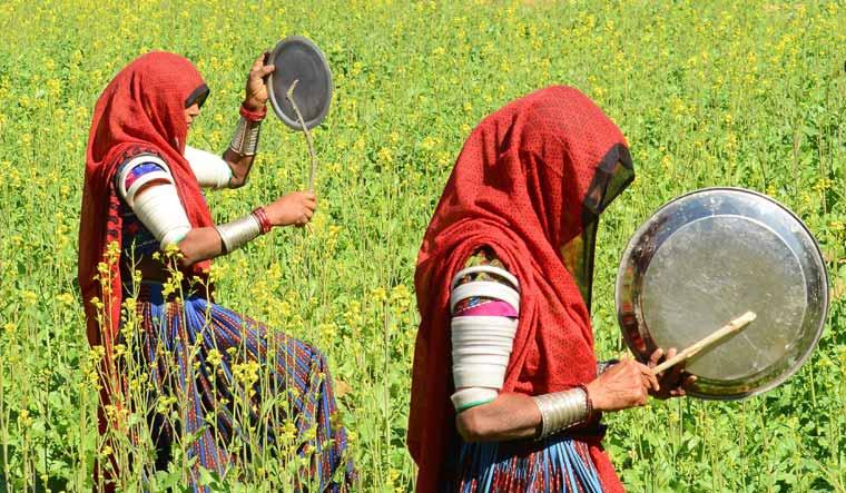 INDIA-AGRICULTURE-ENVIRONMENT-LOCUSTS