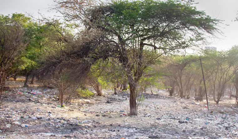 land-degradation-waste-dumped-ousehold-waste-in-acacia-grove-shut