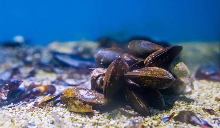 mussels-underwater-sea-shut