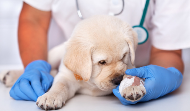 dog-puppy-veterinary-vet-clinic