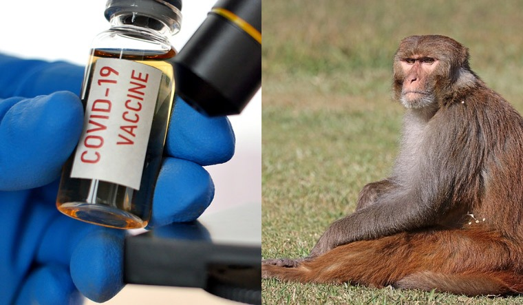Oxford's COVID-19 vaccine works on monkeys, may hit market by ...