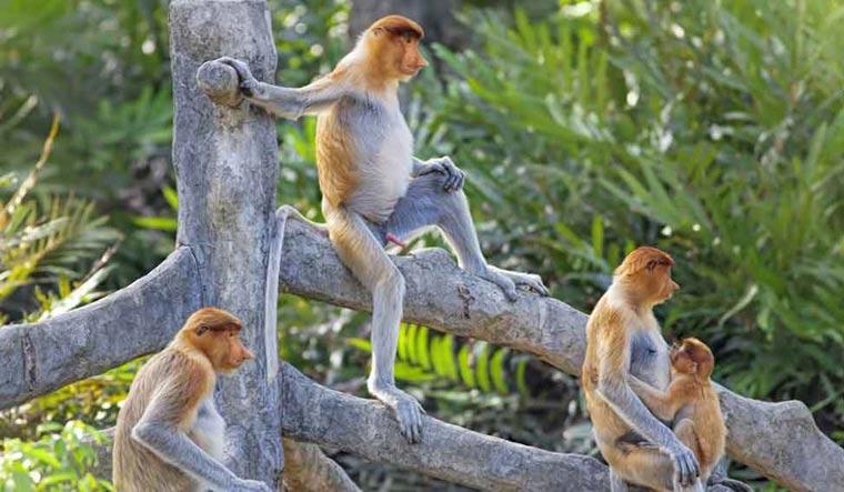 monkeys-monkey-baby-shut