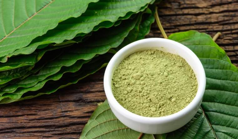 What is kratom: Nutrition facts, uses and side-effects - The Week