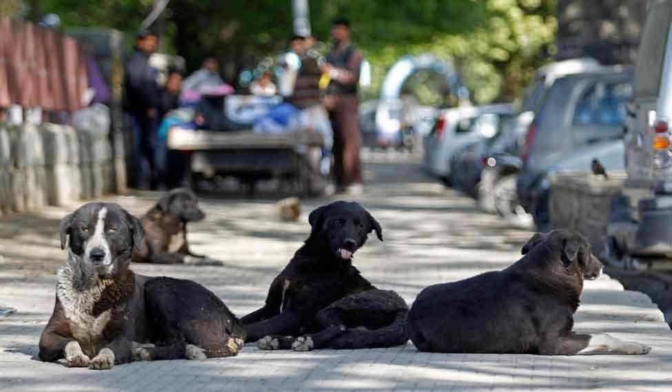 stray-dogs-xlarge