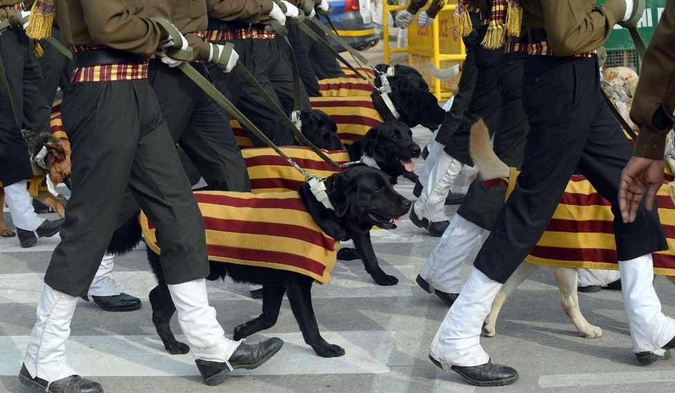 Dogs-Republic-Day-Parade