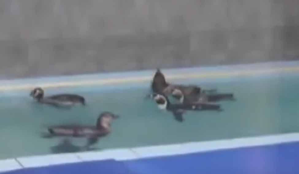penguins-mumbai