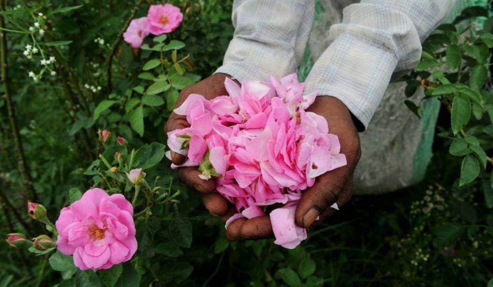 flowers-perfume-afp