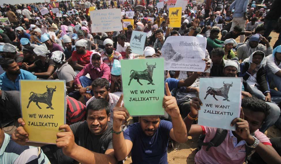 India Bull Taming Sport