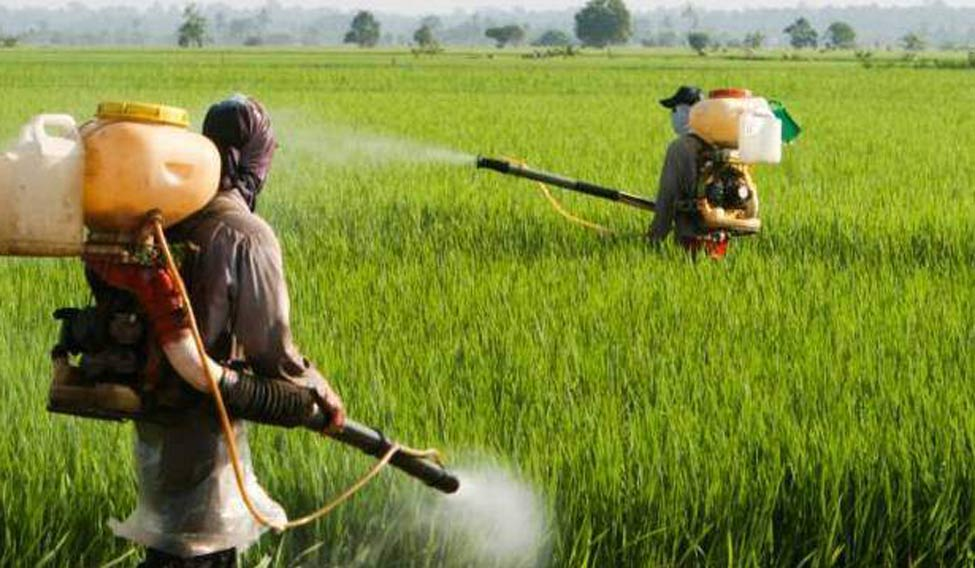 UK researchers developing  natural alternative to pesticides