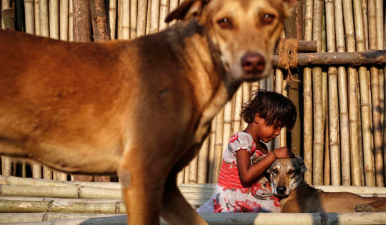 There are an estimated 15 million owner-less dogs in India | Reuters