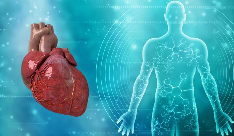 heart-human-humanbody-cardiology-shut