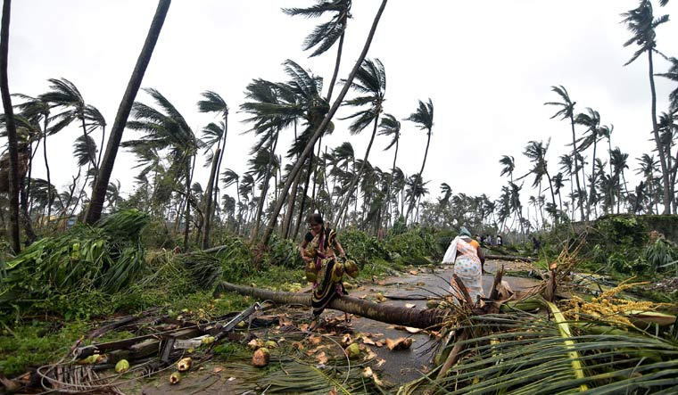 Women carry coconuts next to fallen palm trees after heavy winds brought by Cyclone Titli struck the area in Barua village in Srikakulam district of Andhra Pradesh | AFP