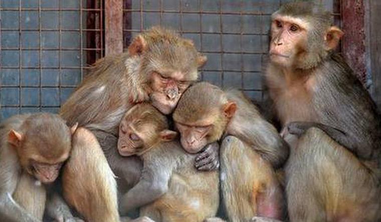 monkey-pti