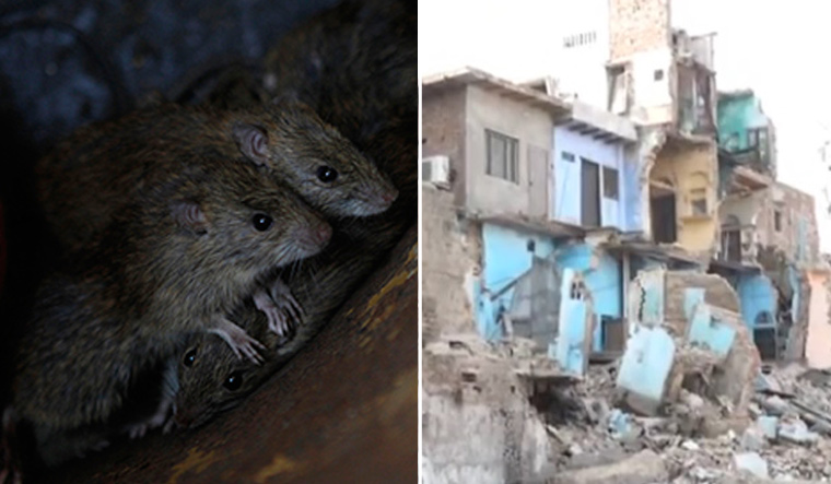 Rats burrowing underground bring down three-storey building in Agra