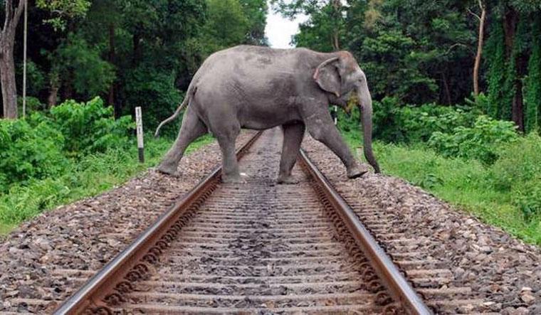 railways elephant pti