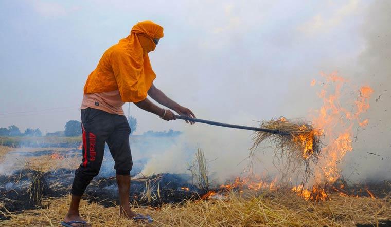 amritsar stubble burning pti