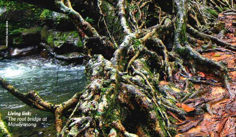 Living-Root-Bridge-Salil-Bera