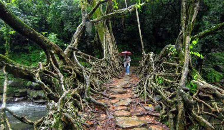 Living-root-bridge-small-salil-bera