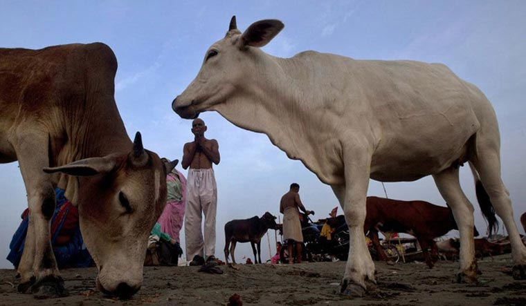 Tripura: Man suspected of stealing cattle lynched