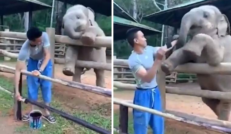 WATCH: Adorable baby elephant video wins internet hearts