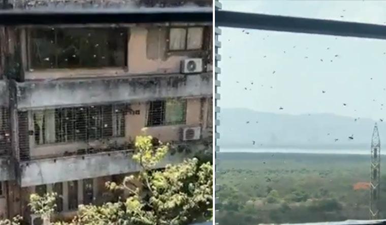 mumbai-locusts-fake-videos-twitter