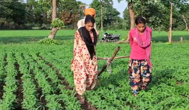 Jamuna and her 16-year-old sister can be seen pulling the traditional hoe implement in place of bullocks for weeding on their agriculture land   Video grab