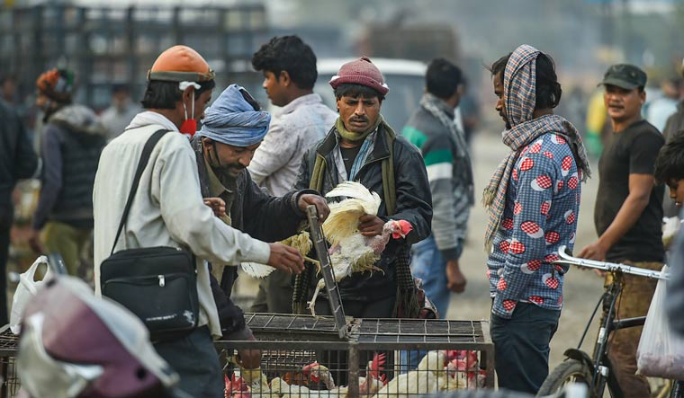 People purchase chickens at Ghazipur Murga Mandi, in New Delhi, on January 9   PTI