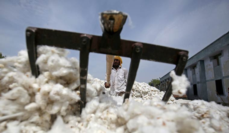 cotton-crop-indian-farmer-reuters