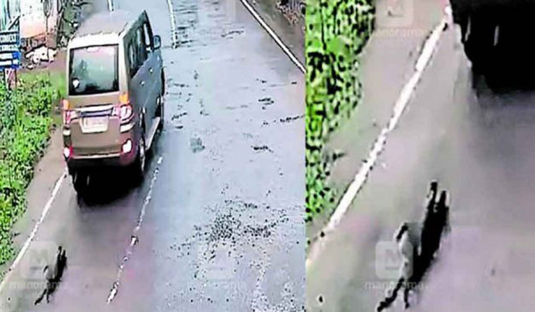 Kerala: Dog dies after being tied to a car, drag along road; youth arrested