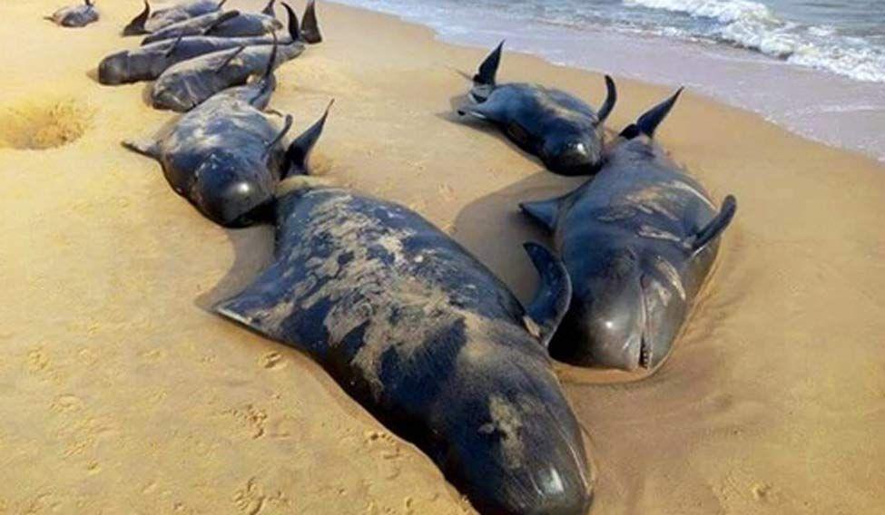 Whales.jpg.image.975.568.jpg (975×568)