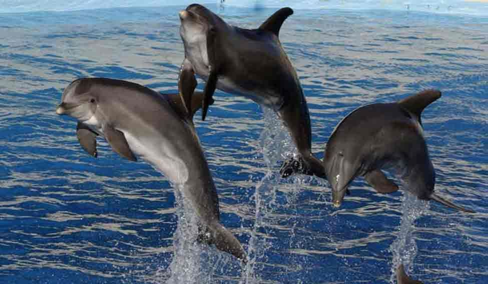 dolphins-cute