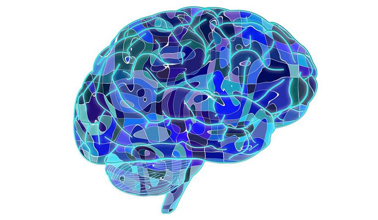 brain-neural-human-body